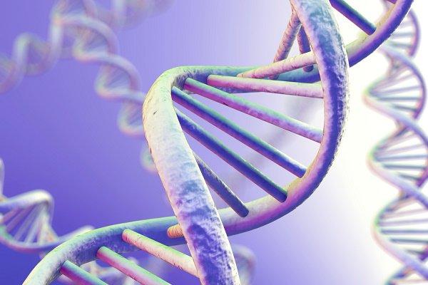 Bệnh giang mai có di truyền không