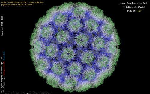Bị nhiễm hpv phải làm sao nếu nguy cơ ung thư cao?